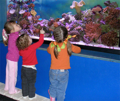 the girls entranced at a fish tank